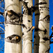 Birch Family - Photo (c) Charles Tilford, some rights reserved (CC BY-NC-SA)
