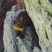 Martes americana caurina - Photo (c) Bryant Olsen, algunos derechos reservados (CC BY-NC)
