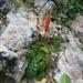 Gesneria brachysepala - Photo (c) Martin Reith, algunos derechos reservados (CC BY-NC)