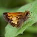 Lon hobomok - Photo (c) Kent McFarland, algunos derechos reservados (CC BY-NC)