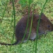 Townsend's Vole - Photo (c) natureguy, some rights reserved (CC BY-NC-ND)