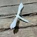 Hellinsia homodactylus - Photo (c) Rob, μερικά δικαιώματα διατηρούνται (CC BY-NC)