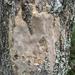Fomitiporia punctata - Photo (c) dschigel, algunos derechos reservados (CC BY)