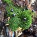 Cladophora columbiana - Photo (c) Paul Engelmeyer, algunos derechos reservados (CC BY-NC)