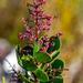 Searsia scytophylla - Photo (c) magriet b, algunos derechos reservados (CC BY-SA)