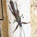 Insectos Sierra - Photo (c) enriquekikin, algunos derechos reservados (CC BY-NC)