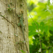 Dominican Giant Anole - Photo (c) Ron Savage, some rights reserved (CC BY-NC-SA)