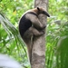 Northern Tamandua - Photo (c) Luca Boscain, some rights reserved (CC BY-NC)