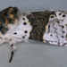 Alder Kitten - Photo (c) Janet Graham, some rights reserved (CC BY)