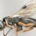 Vanhorniidae - Photo (c) Miles Zhang, alguns direitos reservados (CC BY-NC)
