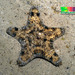 Anthenea - Photo (c) Ria Tan, algunos derechos reservados (CC BY-NC-ND)