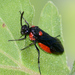 Argid Sawflies - Photo (c) Tracey Fandre, some rights reserved (CC BY-NC-ND)