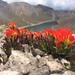 Garañona de Alta Montaña - Photo (c) sunfleurs, algunos derechos reservados (CC BY-NC)