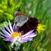 Erebia nivalis - Photo (c) frahome,  זכויות יוצרים חלקיות (CC BY-NC)
