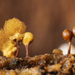 Push Pin Slime Mold - Photo (c) Ricardo Arredondo T., some rights reserved (CC BY-NC)