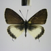 Uranothauma cyara tenuimarginata - Photo (c) Thomas Desloges,  זכויות יוצרים חלקיות (CC BY-NC)