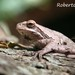 Montevideo Tree Frog - Photo (c) Roberto Guller, some rights reserved (CC BY-NC-ND)