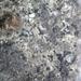 Sarcogyne - Photo (c) tkolozian, algunos derechos reservados (CC BY-NC)