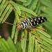 Escarabajo Barrenador del Mezquite - Photo (c) Felix Fleck, algunos derechos reservados (CC BY-NC)