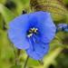 Quesadilla - Photo (c) David Midgley, algunos derechos reservados (CC BY-NC-ND)