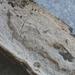 Xylodon flaviporus - Photo (c) Garrett Taylor, algunos derechos reservados (CC BY)