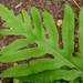 Sensitive Ferns and Allies - Photo (c) John B., some rights reserved (CC BY)