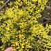 Whitlow-Wort - Photo (c) Sam Kieschnick, some rights reserved (CC BY)