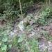 Amaranthus spinosa - Photo (c) Dwayne Estes, μερικά δικαιώματα διατηρούνται (CC BY-NC)