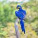 Guacamayo Azul - Photo (c) Allan Hopkins, algunos derechos reservados (CC BY-NC-ND)