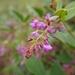 Puhuaea sequax - Photo (c) Shang-Kwei Wang, algunos derechos reservados (CC BY-NC)