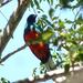 Quetzal Orejón - Photo (c) chitepin, algunos derechos reservados (CC BY-NC), uploaded by Mike Huckaby