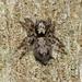 Salpesia squalida - Photo (c) Paul George, algunos derechos reservados (CC BY-NC-SA)