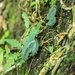 Cranichis lankesteri - Photo (c) gaertnerneuwirth, algunos derechos reservados (CC BY-NC)