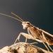 Amorphoscelidae - Photo (c) Bill & Mark Bell, μερικά δικαιώματα διατηρούνται (CC BY-NC-SA)