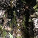 Lasiobelonium variegatum - Photo (c) Carl-Adam Wegenschimmel, osa oikeuksista pidätetään (CC BY-NC)
