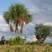 Mauritia flexuosa - Photo (c) Paul Donahue,  זכויות יוצרים חלקיות (CC BY-NC)