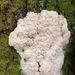 Tapioca Slime Mold - Photo (c) Cara Coulter, some rights reserved (CC BY-NC)