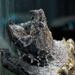 Alligator Snapping Turtles - Photo (c) Jonathan Crowe, some rights reserved (CC BY-NC-ND)