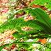 Escolopendria - Photo (c) filipvyskocil, algunos derechos reservados (CC BY-NC)