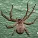 Araña Cazadora Dorada - Photo (c) Benjamin Schwartz, algunos derechos reservados (CC BY-NC)