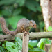 Ruwenzori Sun Squirrel - Photo (c) Sergey Pisarevskiy, some rights reserved (CC BY-NC-SA)
