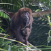 Brown Howler Monkey - Photo (c) Douglas Bete, some rights reserved (CC BY-NC)
