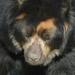 Silmälasikarhut - Photo (c) Valerie, osa oikeuksista pidätetään (CC BY-NC-ND)