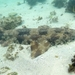 Spotted Wobbegong - Photo (c) Peter, some rights reserved (CC BY-NC)