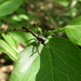 Paraverrucosa neglecta - Photo (c) alemsqdt, algunos derechos reservados (CC BY-NC-ND)