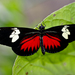 Doris Longwing - Photo (c) Andres Hernandez S., some rights reserved (CC BY-NC-SA)