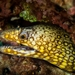 Jewel Moray - Photo (c) Fernando Olea, some rights reserved (CC BY-NC)