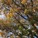 Olmo del Japón - Photo (c) Gregory Mihaich, algunos derechos reservados (CC BY-NC-SA)
