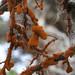 Trentepohliales - Photo (c) Isaac Krone, alguns direitos reservados (CC BY)