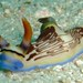 Nembrotha lineolata - Photo (c) SarahDepper, algunos derechos reservados (CC BY)